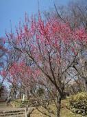 春一番2.jpg